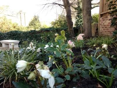 Garden Bursts into Bloom